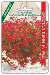 pelargoniya-kristal-kvin-red