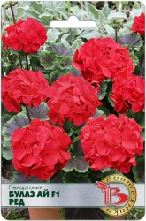 tsv-pelargoniya-bullz-aj-f1-red